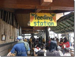 Ark Avilon's Feeding Station